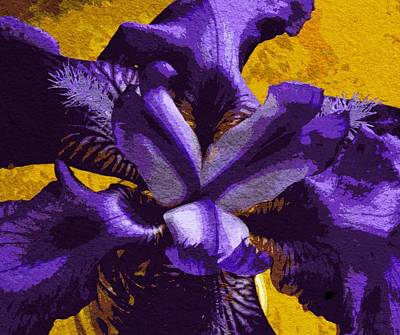 Photograph - Iris  by Chris Berry