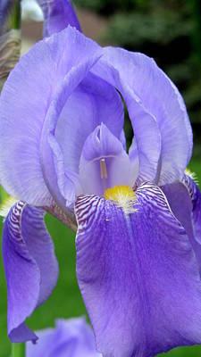 Photograph - Iris Close Up 1 by Anita Burgermeister
