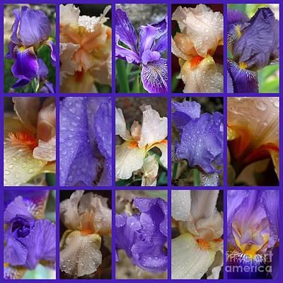 Iris Photograph - Iris Collage by Carol Groenen