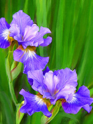 Painting - Iris by Diane Chandler