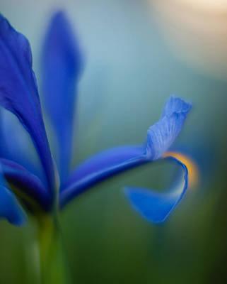 Blue Petals Photograph - Iris Edge by Mike Reid