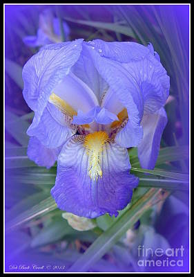 Photograph - Iris Eyes Are Smiling by Deb Badt-Covell