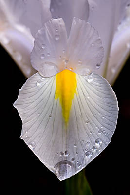 Photograph - Iris Face by Mary Jo Allen