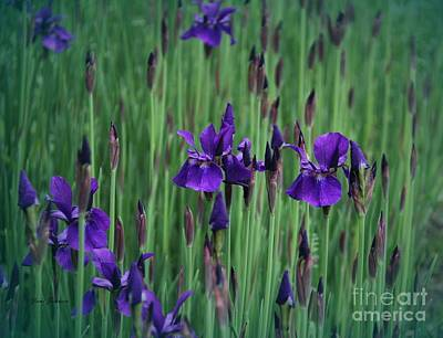 Iris Field Art Print by Yumi Johnson