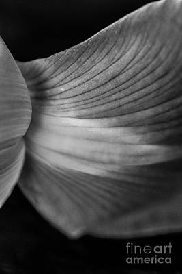 Photograph - Iris Flower Petal Macro by David Haskett