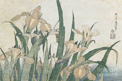 Blue Iris Painting - Iris Flowers And Grasshopper by Hokusai