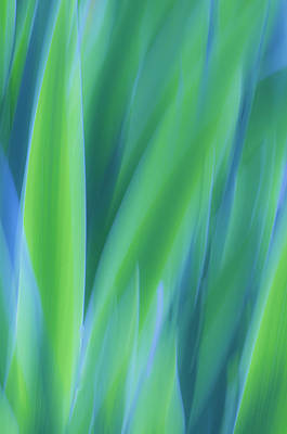 Photograph - Iris Foliage Abstract by Sherri Meyer