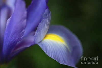 Iris Frozen In Time Art Print
