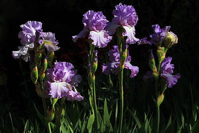 Photograph - Iris Garden by Donna Kennedy