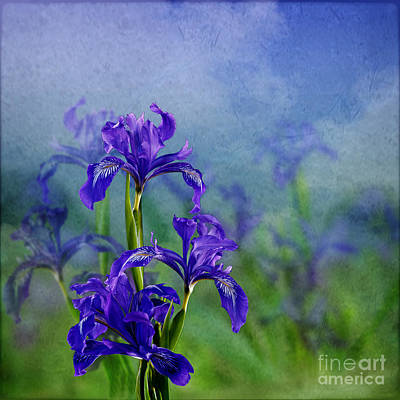 Iris Garden Art Print by Shirley Mangini