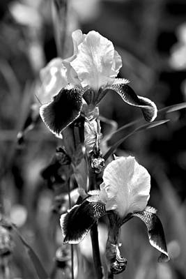 Photograph - Iris In Black And White by Karon Melillo DeVega