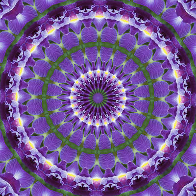 Iris Kaleidoscope  Art Print by Denise Beverly