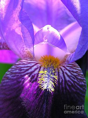 Art Print featuring the photograph Iris Light by Susan  Dimitrakopoulos