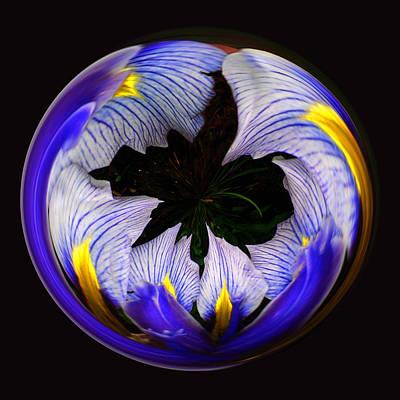 Photograph - Iris Loop by Jim Baker