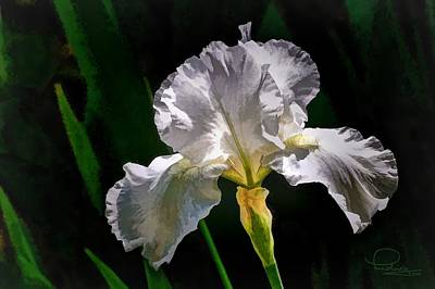 Digital Art - Iris by Ludwig Keck
