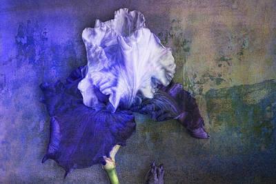 Photograph - Iris Number Three by Bob Coates
