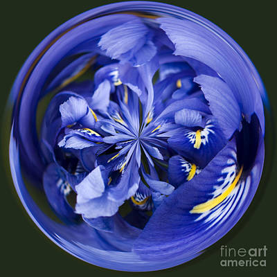 Manipulation Photograph - Iris Orb by Anne Gilbert
