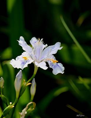 Photograph - Iris Pacifica 2 by Maria Urso