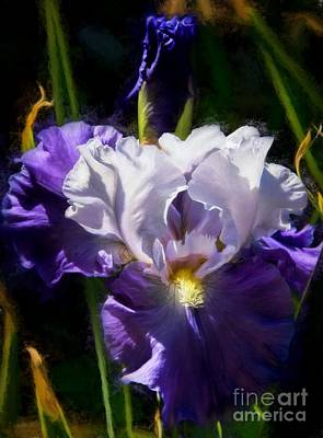 Photograph - Iris by Peggy Hughes