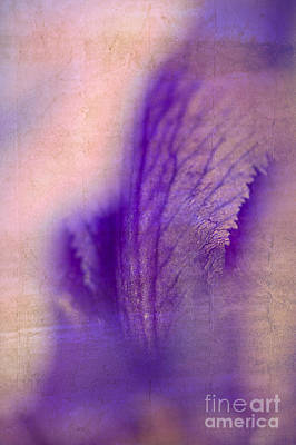 Photograph - Iris Petal by Lee Craig