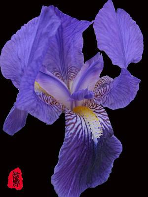 Iris Photograph - Iris Photo by GuoJun Pan