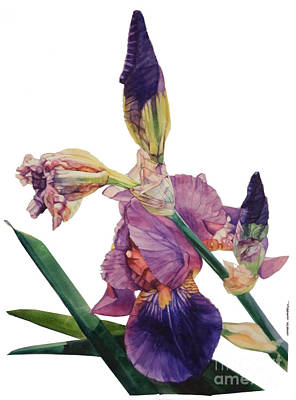 Painting - Watercolor Of A Tall Bearded Iris In A Color Rhapsody by Greta Corens