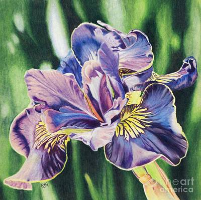 Drawing - Iris by Rosellen Westerhoff