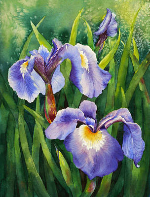 Iris Setosa Alaska Art Print