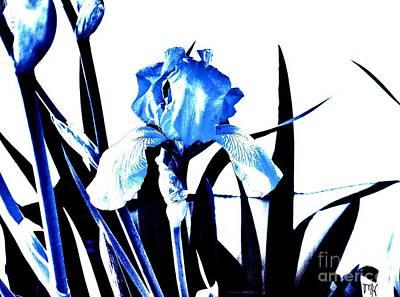 Iris Sillouette Art Print