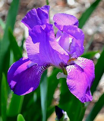 Photograph - Iris This Close by Deena Stoddard