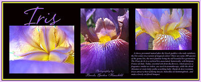 Iris Threesome Art Print by Brooks Garten Hauschild