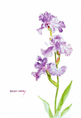 Painting - Iris Trio by Rachel Lowry
