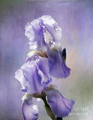 Photograph - Iris Twins by Vicki DeVico