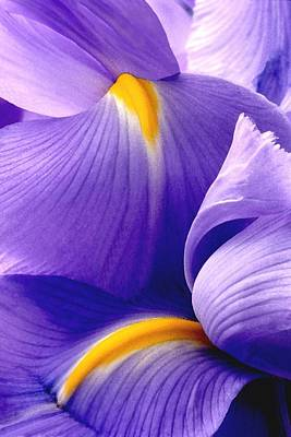 Photograph - Iris Vi by Michael Moschogianis