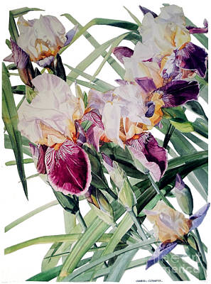 Painting - Watercolor Of Tall Bearded Irises I Call Iris Vivaldi Spring by Greta Corens