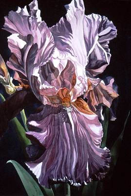 Iris With Light Art Print by Alfred Ng
