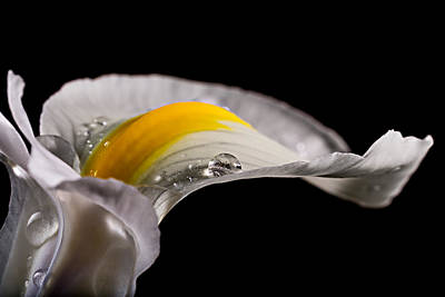 Photograph - Iris With Water by Mary Jo Allen