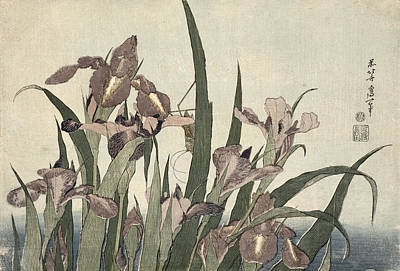 Irises Drawing - Irises And Grasshopper by Katsushika Hokusai