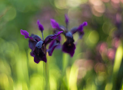 Abstract Flowers Royalty-Free and Rights-Managed Images - Irises Depth by Mike Reid