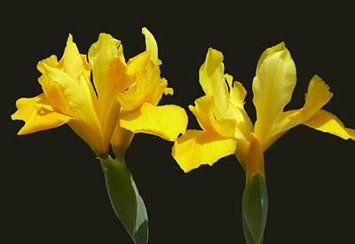 Abstract Sailboats - Irises by Lena Photo Art