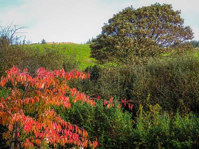Photograph - Irish Autumn Countryside by James Truett