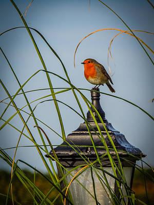 Photograph - Irish Robin Perched On Garden Lamp by James Truett