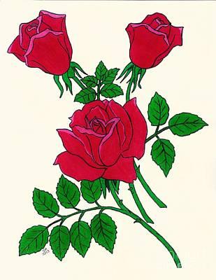 Nature Drawing - Irish Rose by D Hackett