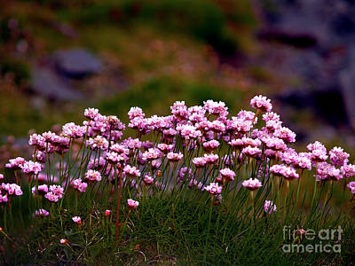 Irish Sea Pinks Art Print by Patricia Griffin Brett