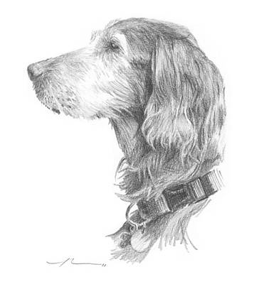 Drawing - Irish Setter Dog Pencil Portrait by Mike Theuer