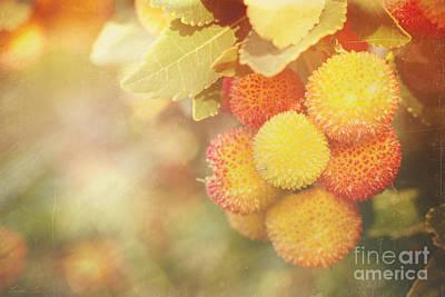 Photograph - Irish Strawberries by Linda Lees