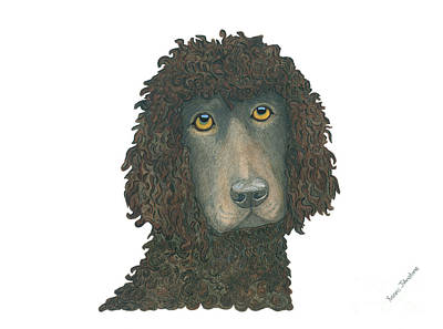 Painting - Irish Water Spaniel by Yvonne Johnstone