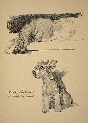 Pastel Pet Portrait Drawing - Irish Wolfhound And Wire Haired Terrier by Cecil Charles Windsor Aldin