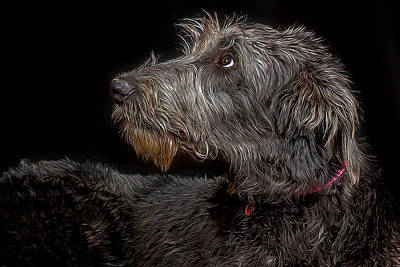 Irish Wolfhound Photograph - Irish Wolfhound Iv by Agustin Uzarraga