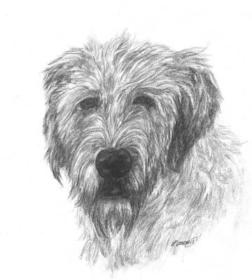 Irish Wolfhound Drawing - Irish Wolfhound by Meagan  Visser
